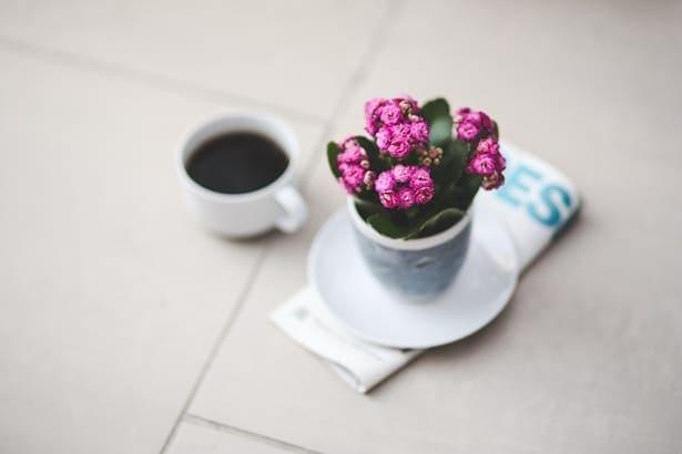 чаша с кафе и саксия с цвете