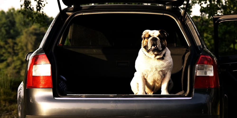 Куче в багажник на кола
